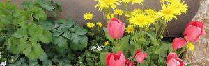 18_01_frhlingsblumen