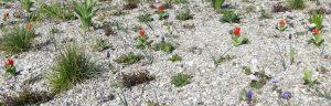 20_04_1_gemzentr_bepflanzung