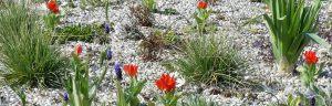 20_04_2_gemzentr_bepflanzung